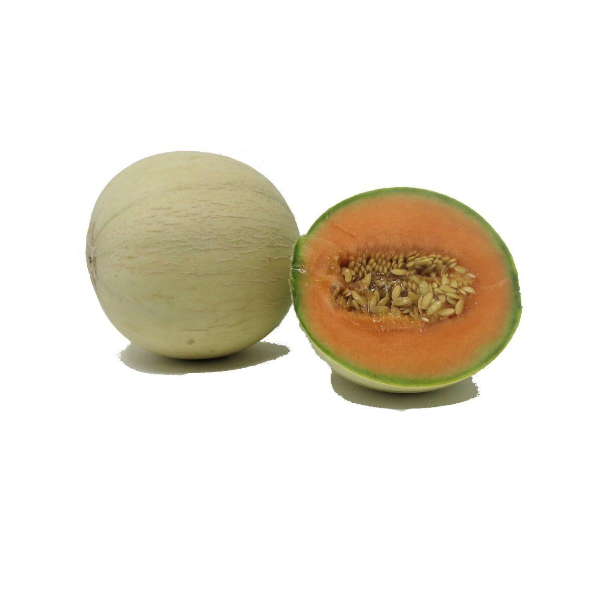 melone liscio xx1