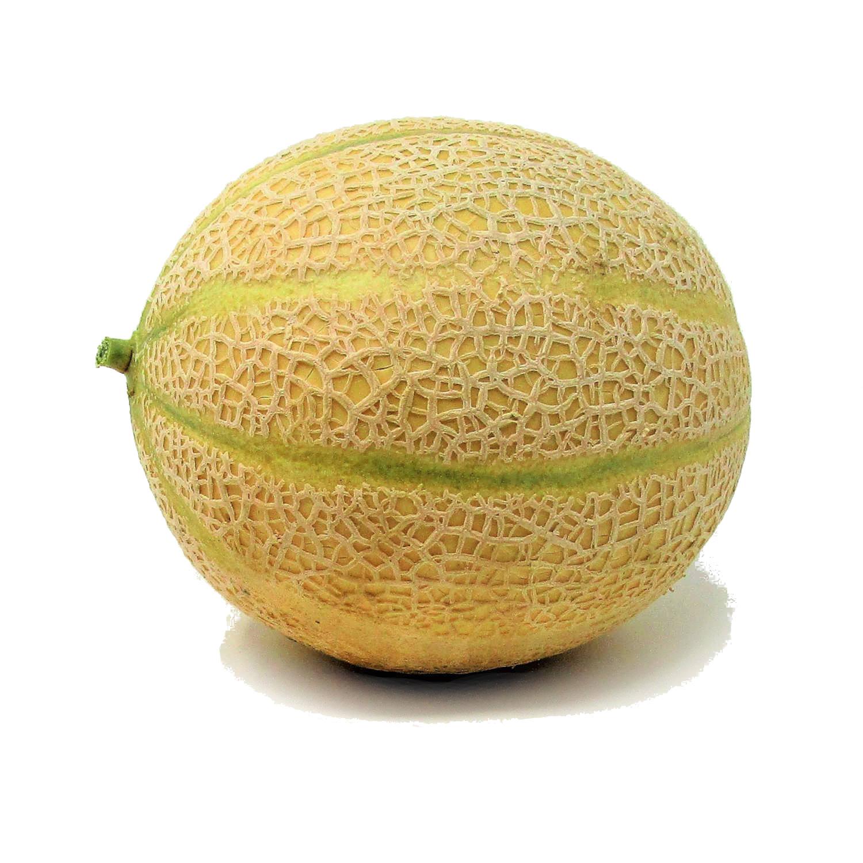 melone retato xx1