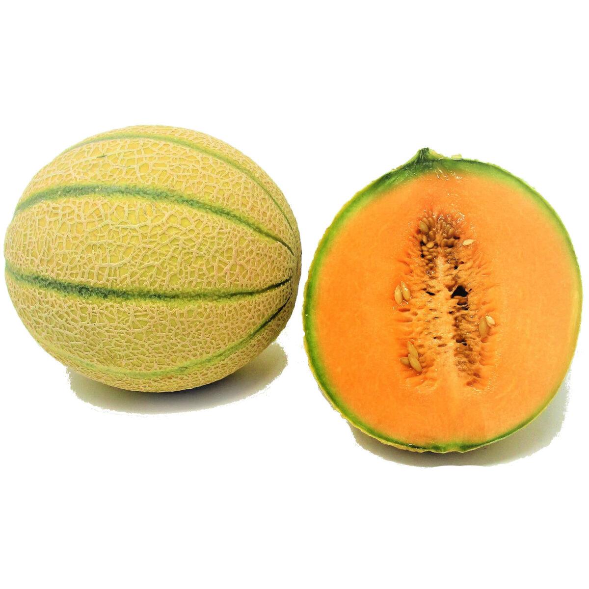 melone retato xx3